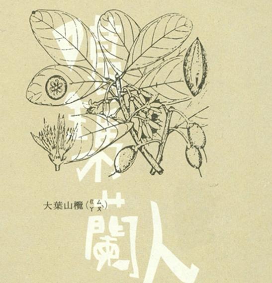 探索民族植物誌—以宜蘭縣噶瑪蘭族民俗植物之應用為例
